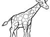 giraffa-bianco-e-nero