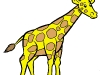 giraffa-colorata