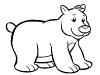 orso-bianco-e-nero