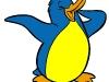 pinguino-colorato