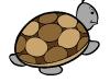 tartaruga-colorata