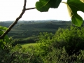 colline-montespertoli
