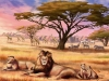 leoni-nella-savana