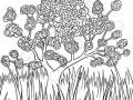 albero-fiorito