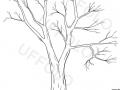 albero-senza-foglie