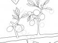 bacche-sui-rami-dell'albero