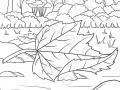 bosco-in-autunno