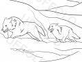 coppia-di-lupi