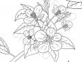 fiori-primaverili-con-foglie