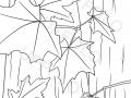 foglie-autunnali-che-cadono-dagli-alberi