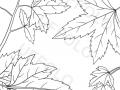 foglie-d'autunno