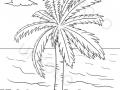 palma-sulla-spiaggia