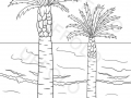 spiaggia-con-le-palme