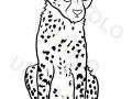 cucciolo-ghepardo