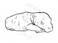 cucciolo-ippopotamo
