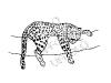 leopardo-sull'albero