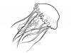 medusa-pelagia
