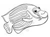 pesce-angelo-imperatore