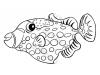 pesce-balestra-pagliaccio