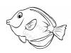 pesce-chirurgo