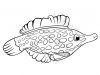 pesce-lima-dal-rostro