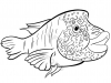 pesce-napoleone