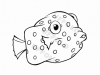 pesce-scatola