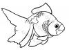 pesciolino-d'acqua-dolce