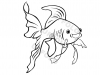 pesciolino-rosso