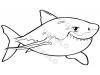 squalo-bianco