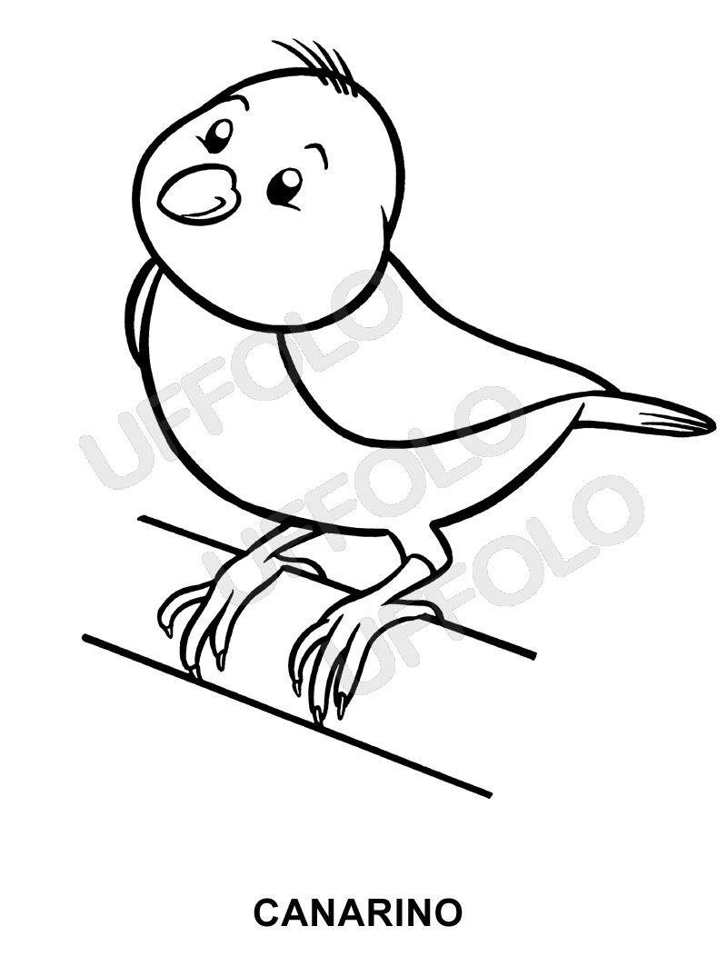 Disegni Immagini Da Stampare E Colorare Uccelli E Volatili Di