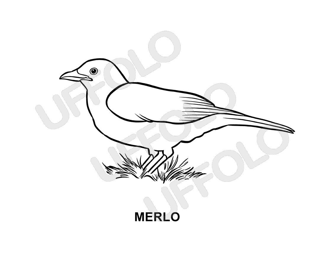 Disegni immagini da stampare e colorare uccelli e for Pesci da disegnare per bambini