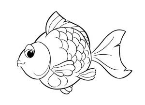conosciamo i pesci