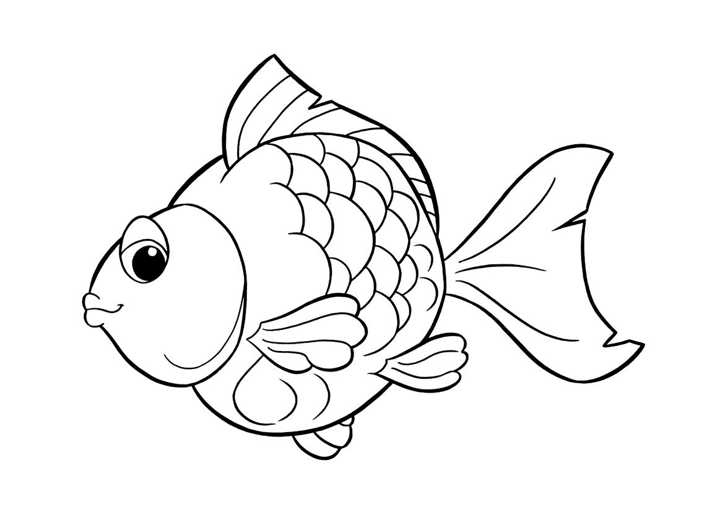 Conosciamo i pesci uffolo for Cibo per pesci tropicali