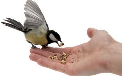 Un uccellino per amico