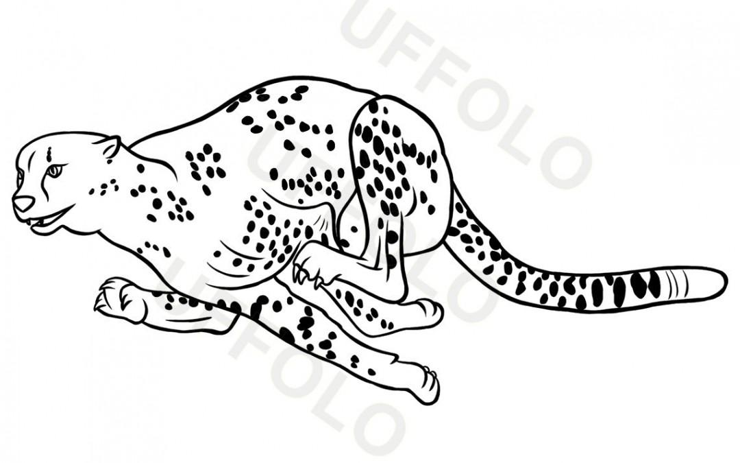 Immagini di animali per scuola e bambini