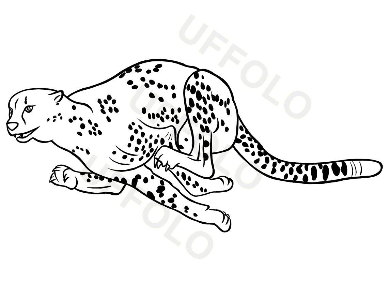 Immagini Di Animali Per Scuola E Bambini Uffolo