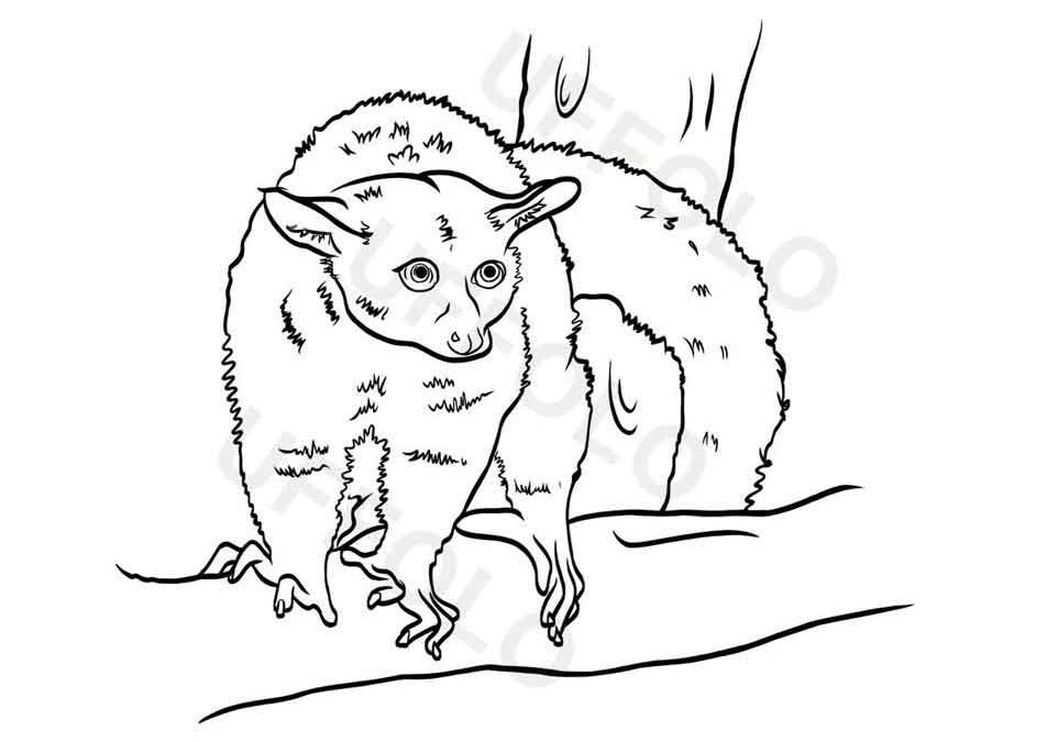 Utilizzare i disegni degli animali per bambini